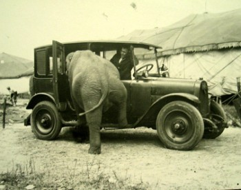 elephant-in-car